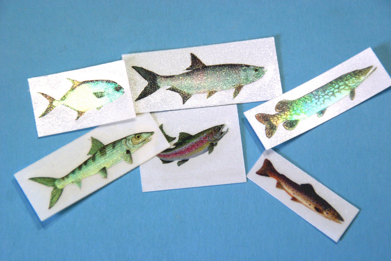 Raw trout | Old School RuneScape Wiki | Fandom | 2000x3000