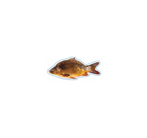 Mirror Carp Decal