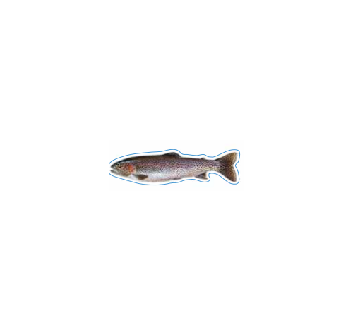 Rainbow Trout Decal